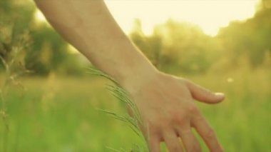 Young Man Walks Through Tall Grass In Slow Motion (Close Up Of His Hand Feeling Grass) — Stock Video