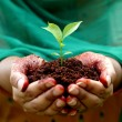 Hands holding small plant - New life — Stock Photo #60803523