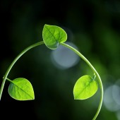 Fresh green leaves for backgrounds — Stock Photo