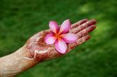 Beautiful plumeria flower in henna hand — Stock Photo