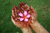 Beautiful plumeria flower in henna hands — Stock Photo