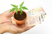 Money and plant in hands — Stock Photo