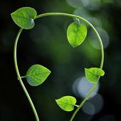 Čerstvé zelené listy pro pozadí — Stock fotografie