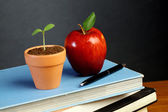 Blackboard with books,apple and plant — Stock Photo