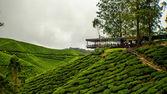 Fazendas de chá — Fotografia Stock