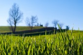 Grass in a field — Stock Photo