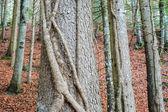 Tree trunk — Stock Photo