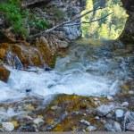 Mountain river in Slovenia — Stock Photo #61389429