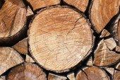 Cut tree trunk — Stock Photo