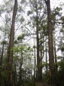Cloud forest in Sri Lanka — Stock Photo