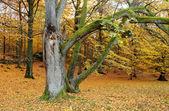 Autumn in Sweden — Stock Photo