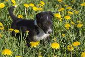 Portrait of a cute little puppy. — Foto de Stock