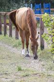 Horse in the aviary. — Stock Photo