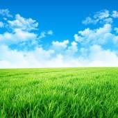 Green like a meadow in the sun — Stock Photo
