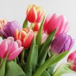 Постер, плакат: Tulips bouquet