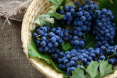 Ripe Wine Grapes — Stock Photo