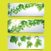 Foliage Banner Set — Stock Vector