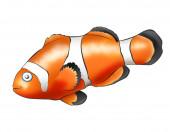 Fish - Clown — Stock Photo
