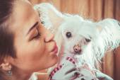 Dog with hair — Stock Photo