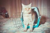 A portable cage for cats — Stock Photo
