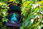 Traffic light showing the green light — Stock Photo