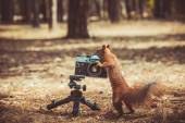 Red squirrel with a film camera — Stock Photo