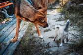 Big dog and small kitten — Stock Photo