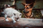 Big dog and small kitten — Stok fotoğraf