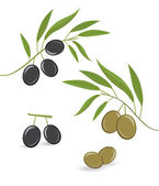 Black and green olives — Stock Vector