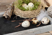 Easter eggs in nests and feathers on a blackboard on a wooden background. Easter background. — Stock Photo