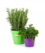 Fresh rosemary and fennel in buckets on a white background. — Stock Photo