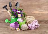 Tools for work in a garden and with houseplants on a wooden background. Flowers in a watering can and a bucket. — Stock Photo