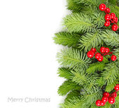 Fluffy branches of a Christmas tree and red berries on a white background. A Christmas background with a place for the text. Top view. — Stock Photo