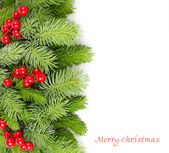 Fluffy branches of a Christmas tree and red berries on a white background. A Christmas background with a place for the text. — Stock Photo