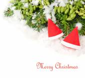 Two red Christmas caps on branches of a Christmas tree and other coniferous plants on a white background. A Christmas background with a place for the text. — Stock Photo
