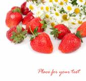 Fresh ripe strawberry and camomiles on a white background with a place for the text. — Stock Photo