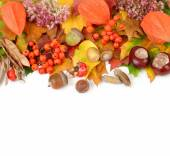 Autumn background with leaves, chestnuts, a mountain ash, acorns and other autumn natural materials with a place for the text. Autumn composition on a white background. — Stock Photo
