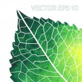 Watercolor green  leaf — Stockvector