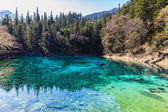 Beautiful pond in Jiuzhaigou national park — Zdjęcie stockowe