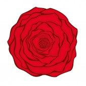 Vector illustration of red rose on white background — Stock Vector