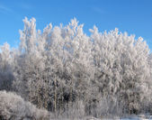 Winter forest in snow — Stock Photo