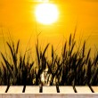 Old wood table and grass Silhouette At yellow Sunset Sunset colored smoke and grass background. — Stock Photo #62821111