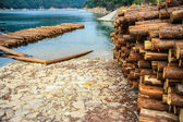 Timber on the river bank — Stockfoto