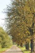 Avenue along the chestnut trees in autumn — Stock Photo