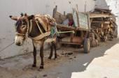 Burro de transporte, o mercado em Nabeul, Tunisia — Fotografia Stock