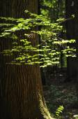 Young leaves of the trees. The rays of the sun piercing through the treetops — Stock Photo