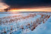 Snow in the field at sunset. winter landscape — Stock Photo