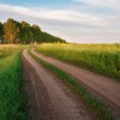 Road in a field of sunflowers — Stock Photo #60716689