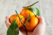 Tangerines with leaves in the hands of a child — Stock Photo