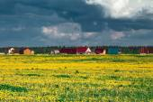 Field of yellow dandelions against the cloudy sky. — Stock Photo